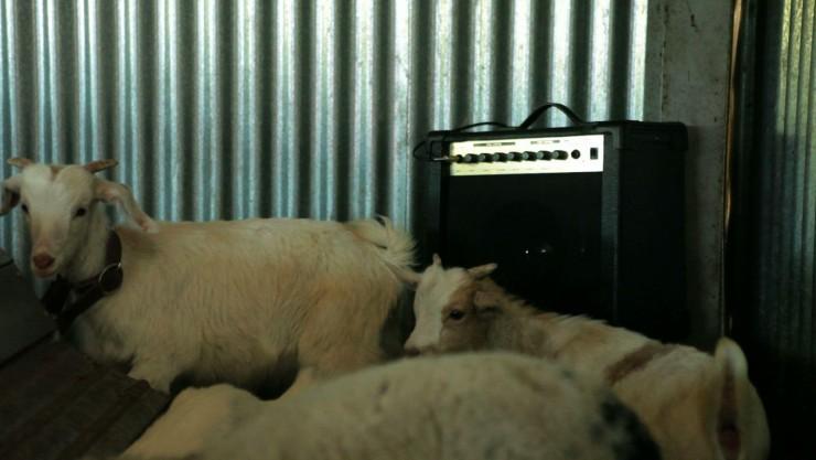 Imagen película Animalización