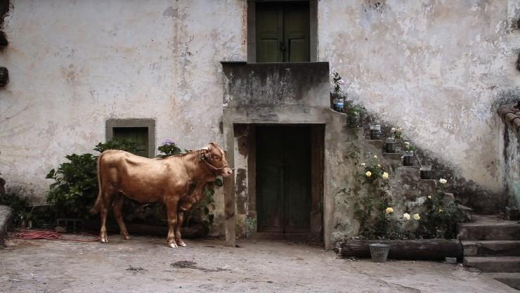 Imagen película El becerro pintado