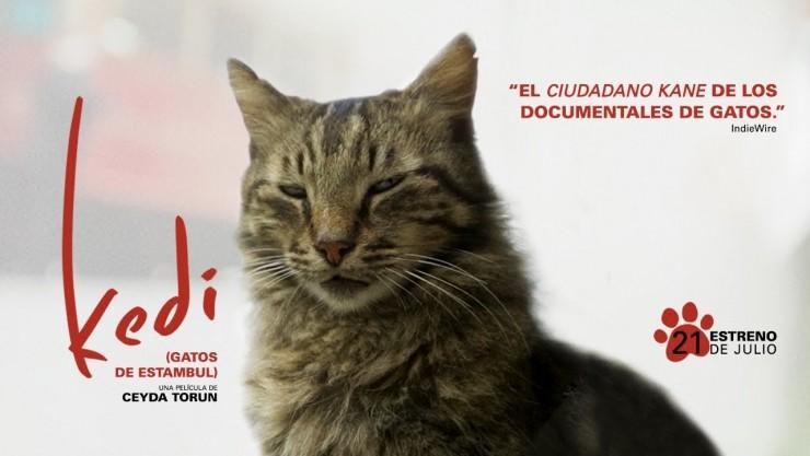 Imagen película Kedi (gatos de Estambul)